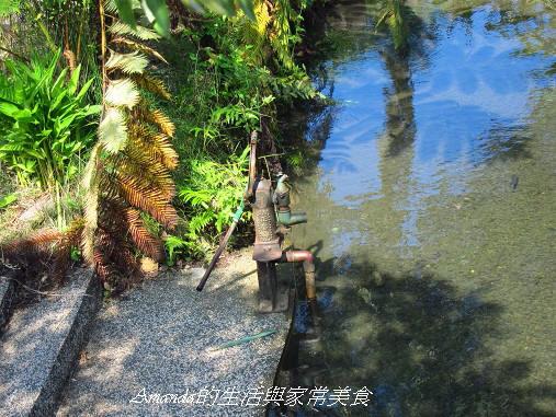 宜蘭-花泉農場-野薑花園-泡冷泉-野薑花粽DIY