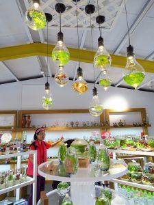今日熱門文章:宜蘭員山-勝洋水草休閒農場-親子樂遊最佳景點-食尚玩家推薦