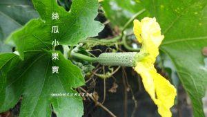 今日熱門文章:食材小知識-認識蔬菜-烹調方式