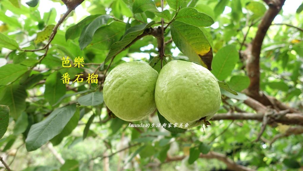 檸檬,水果,芒果,芭樂 @Amanda生活美食料理