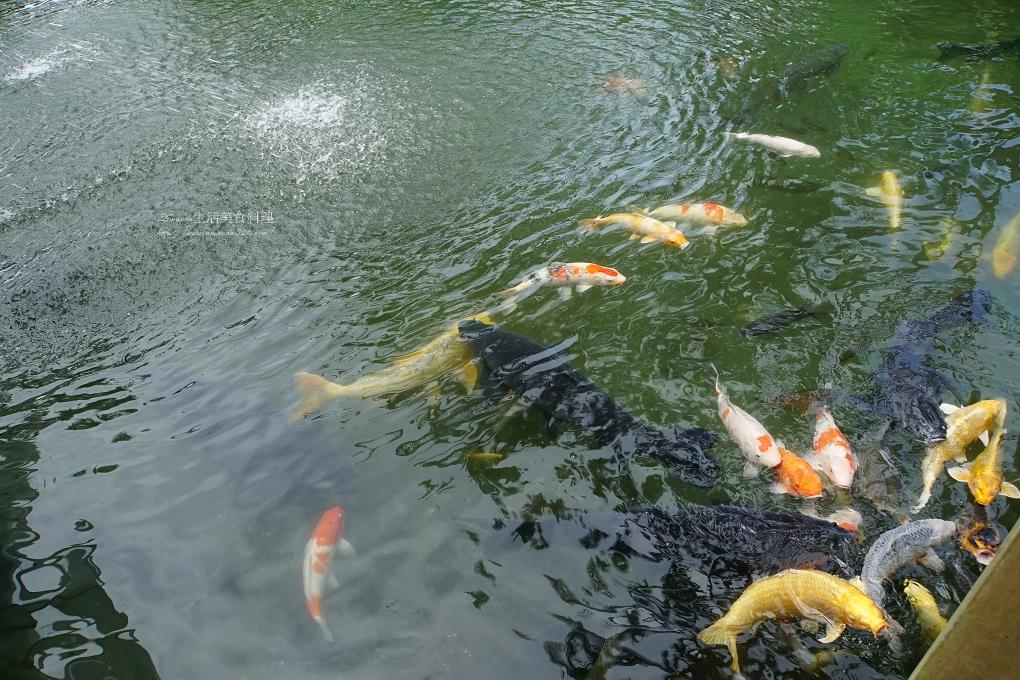 五餅二魚,台灣好行,壽豐,立川漁場,立川漁場貴妃魚,立川魚場,縱谷花蓮線,花蓮,花蓮景點,黃金蜆