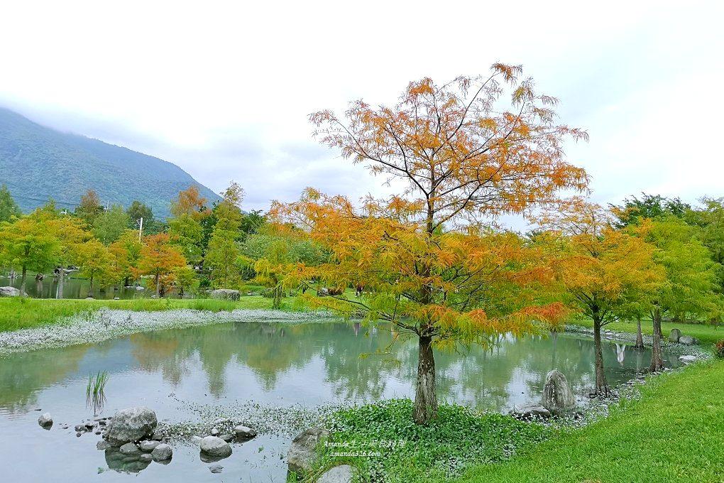 花蓮吉安-松湖驛站、落羽松